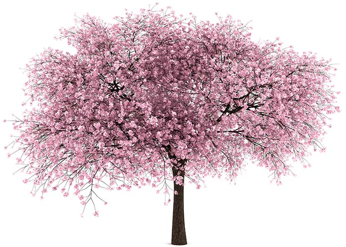 Tree-with-pink-blossoms